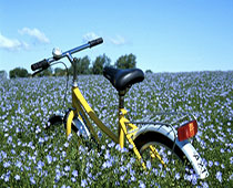 hyra cykel ven pris